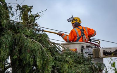 Things You Must Know Before Choosing Tree Lopping Services