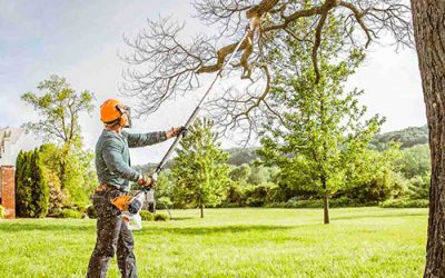 Benefits of Using Professional Tree Trimming Services