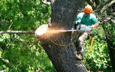 Before You Hire a Tree Service, Know Which Details To Look For