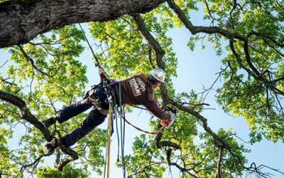 Tree Services: Experts Can Prune, Prevent Disease and Remove