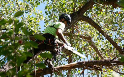 Why Hiring An Arborist Is The Right Decision